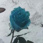 Декорируем цветы)